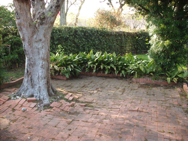 Trees For Patios. Greathouse Realty Houston Texas Real Estate Listings